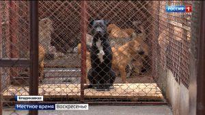 Во Владикавказе строится новый питомник для бродячих животных