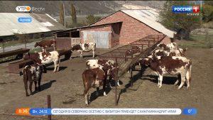 В Унале готовится к запуску завод по переработке молока