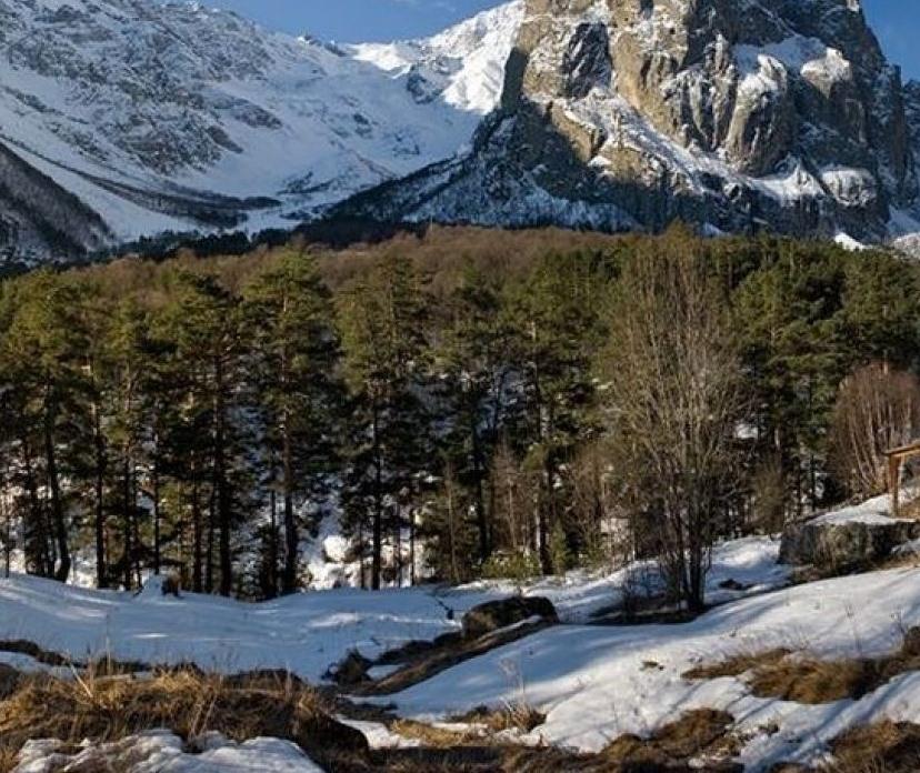 Северная Осетия – в десятке лучших в рейтинге эффективности исполнения регионами переданных лесных полномочий