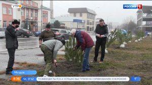 Саженцы крымской сосны высадили в центре Моздока