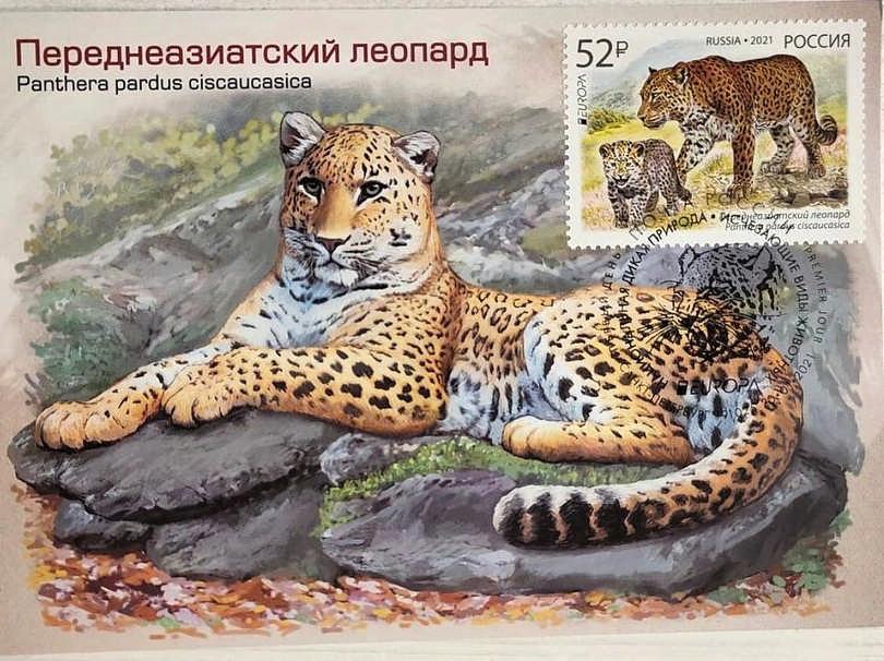 Почта России выпустила марку с кавказским барсом
