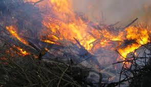 В районе владикавказского дендрария потушили возгорание сухостоя