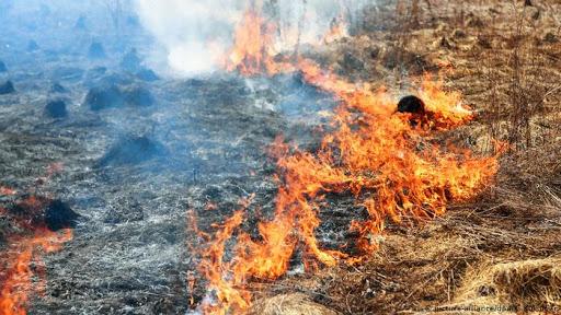 Возгорание сухостоя у селения Харисджин удалось локализовать, но очаги горения остаются