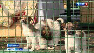 Во Владикавказе открылся новый приют для бездомных животных