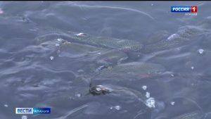 В Северной Осетии готовятся к запуску программы по развитию рыбоводства