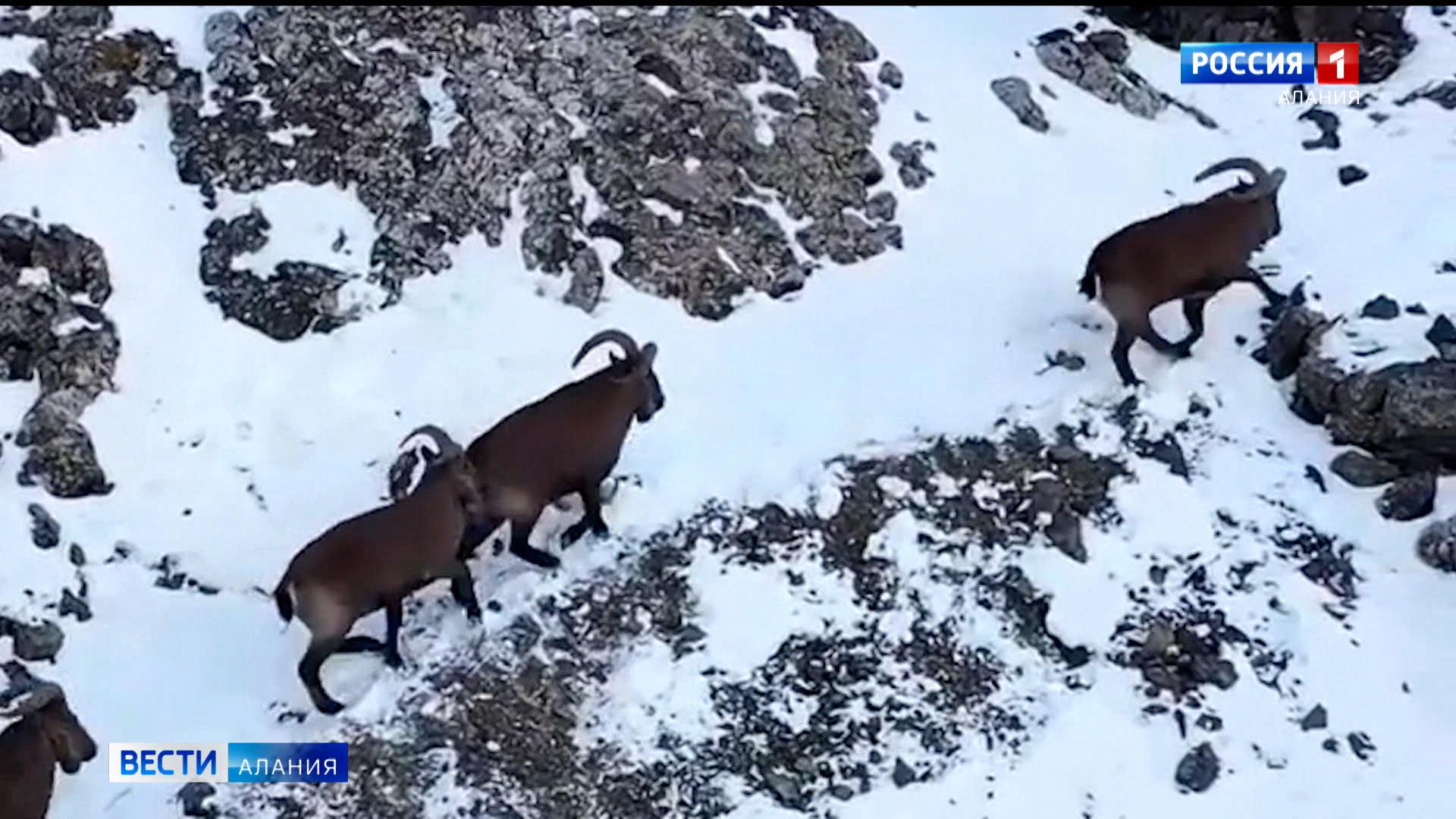 3 марта — Всемирный день дикой природы