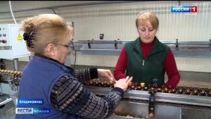 Североосетинские предприятия успешно реализуют свою продукцию на экспорт