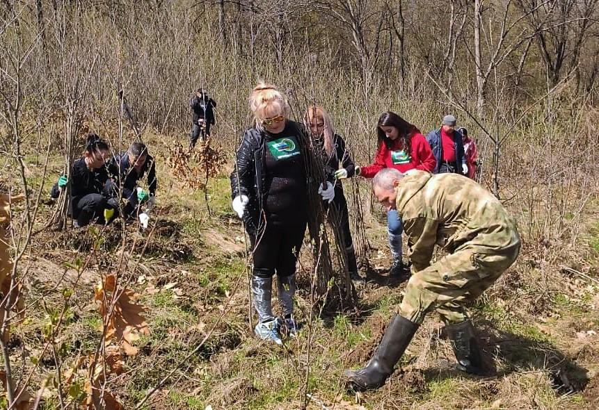 В Тарском высадили более 5 тысяч саженцев дуба в память о Герое Советского Союза Иване Цховребове