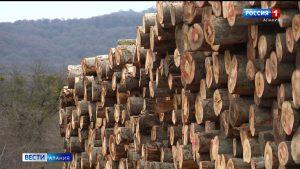 Жители Урсдона обеспокоены вырубкой леса в Дигорском ущелье