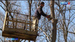 Прокуратура: работы по обрезке деревьев во Владикавказе, проводимые в границах памятников природы, не были согласованы с Минприроды