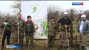 В Алагирском районе высадили саженцы дуба в память о братьях Урумовых